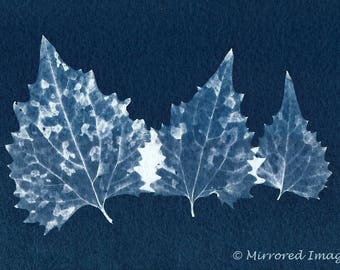 Original Unique Botanical Art Cyanotype Miniprint of three leaves