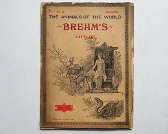 Antique 1896 Brehm's Life of Animals, Part 24-A, Illustrated, 1890s Booklet, Marquis & Company, Rodents Gnawing Animals, Toothless Animals