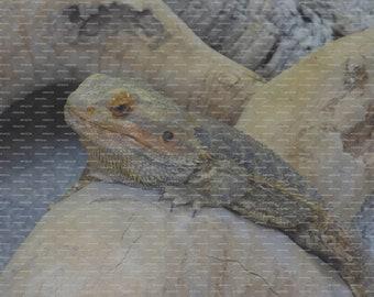 Poster Print using Image of an Original Reptile