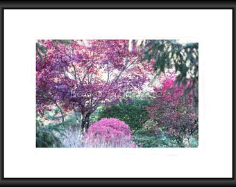 Fall Pink, Photography, Free Shipping, Print, Framed Print, Canvas Wrap, Canvas with Floating Frame, Wall Art, Home Decor, Nature pic. Art