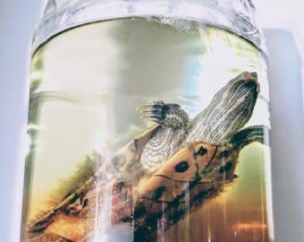 Preserved Turtle - Wet Specimen - Oddities - Taxidermy - CRUELTY FREE