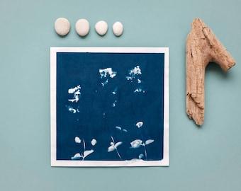 """Original Cyanotypie """"Elfenspiegel"""" auf Hahnemühle Skizzenpapier im quadratischen Format (21 x 21 cm)"""