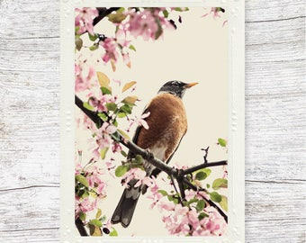 Robin Note Card, Card with Bird, Photo Note Card, Gift for Her, Nature Photography