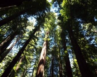 Redwood Trees - Digitally Enhanced 8x10 Photo Print