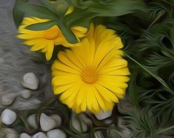 Yellow Flower -Digitally Enhanced 8x10 Photo Print