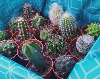Cactus Gift Box (15)