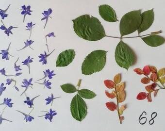 herb mix purple flower petals fern leafs scrapbook kit green leafs red flowers white daisy flowers field plants summer flowers diy flower э4