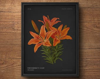 Lily print, Botanical wall art, Flower print, Orange flower, Vintage botanical print, Antique botanical, Large wall art, Large print
