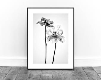 Peonies Print, Still Life Photography Print, Black and White Photography Print,