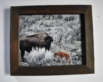 8x10 Mama & Calf rustic frame