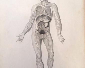 19th Century Anatomy Engravings - 2
