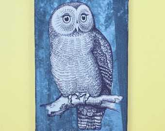 Barn Owl Blue