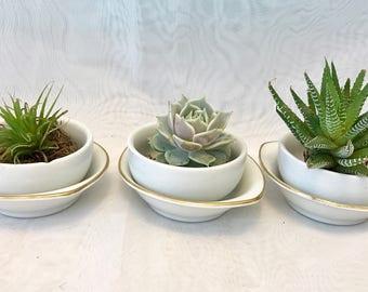 Set of 3 Gold rim dish bowl planter set/Live succulents/farmhouse decor/shabby chic/succulent garden/gift