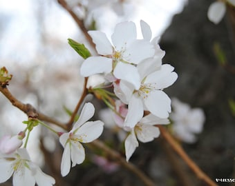 Spring Flowers Photograph