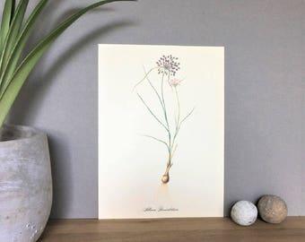Herbarium Print, Plant Poster, Botanical Poster Chart, Herb Print, Herb Poster, Plant Art Illuatration, Plant Print, Vintage BotanicalPrint,