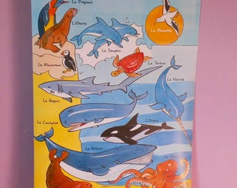 "post educational (64x44cm) ""sea animals"