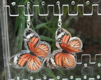 The flight of butterflies