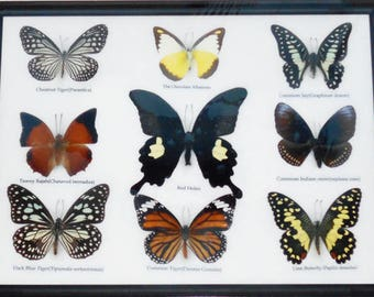 REAL 9 BEAUTIFUL BUTTERFLY Collection in Frame / BF08A