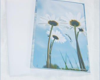 Carte double faite main Marguerites bleues de Céline Photos Art Nature