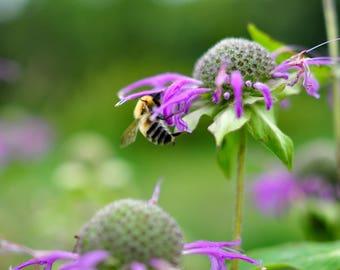 digital photo download, home decor, beautiful, juicy, summer nature