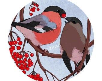Bullfinch Greetings Card