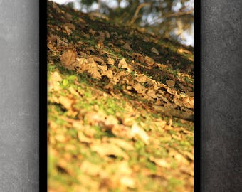 Leaves - original photo art picture