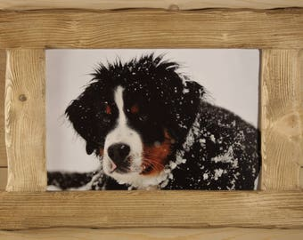BOUVIER BERNESE BRUSHED WOOD FRAME