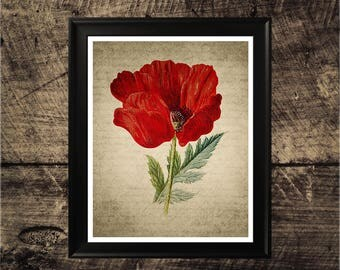 Vintage Poppy flower  print, home decor, vintage botanical wall art,  poppy art, printable poppy, instant download, red flower art