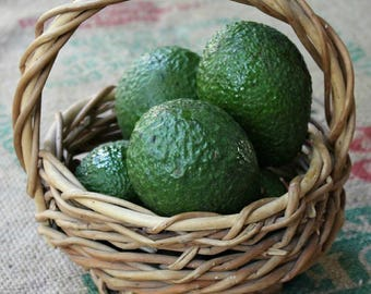 Avocado Tree - Grafted, Cold Hardy, 3'-4' high 3 gallon - Brogdon, Fantastic, Joey, Winter Mexican - Naturally & Organically Grown