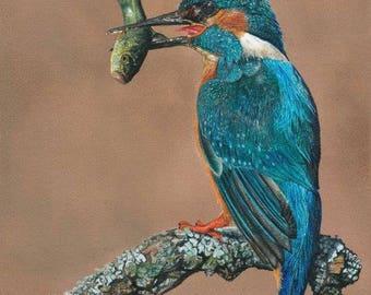 Kingfisher Fine Art Painting Print