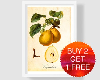 Yellow Pear Art Print, Antique French Art Print, Pear Botanical Illustration, Yellow Pear Poster, Yellow Pear Wall Art, Vintage Pear Decor