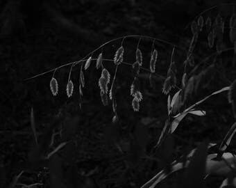 Black and White Photo of Grass Seeds at Mayfield Park  //  Nature Photography in Austin, Texas