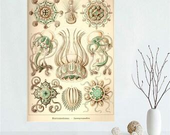Vintage Haeckel Sea Shell Painting Wall Silk Biology Study silk poster home decoration custom