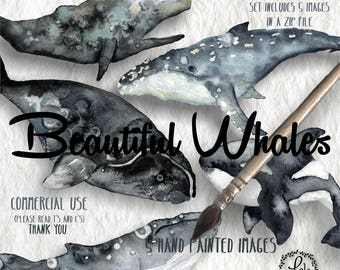 Beautiful Whale Digital Clipart | Blue Orca Sperm Humpback Right Whale  | Hand Painted Watercolor | Personal&Commercial Use | PNG Images