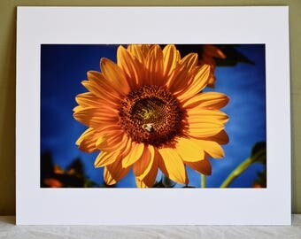 Sunflower and Bee: Fine Art Photography Mounted and Matted