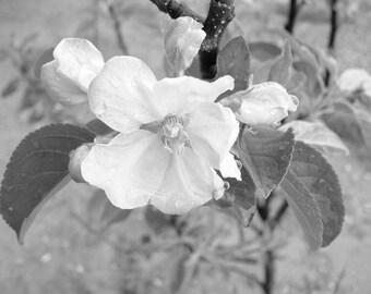 Black&White, Flower wall decor, Nature photography, Photography art print, Nature wall art, home decor, photography, artwork, wallpaper