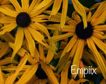Yellow Summer Flowers by Empiix