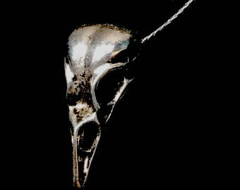 raven skull charm necklace
