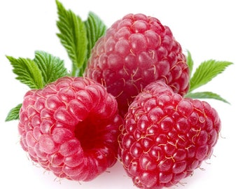 RASPBERRY Fragrance Oil Candle Scent - 4oz