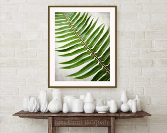 Botanical photography print green fern plant leaves large wall art - Sword Fern