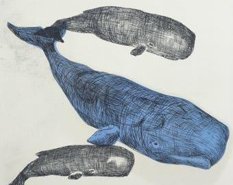 3 Sperm Whale - Drypoint print