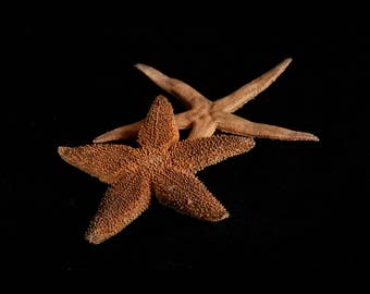 Photograph of starfish
