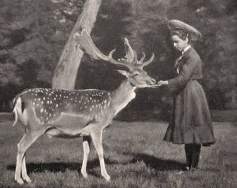 Antique deer and girl photo postcard, Antique Art Nouveau girl and deer RPPC, Antique French pretty girl with deer photo postcard