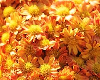Fall Flowers Photo, Autumn Home Decor, Orange Chrysanthem Art Print, Seasonal Home Wall Print