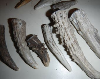 Gnarly Drilled Antler Tips or Points for Pendants Etc - 5 Assorted Pieces - PICK Your SIZE