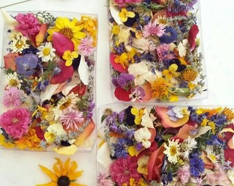 Dry Flowers, Craft Supply, Petals, Wedding Confetti, Flower Girl, Wedding Decor, Aisle Decor, Reception, Decoration, 3 Clear Boxes or Bags