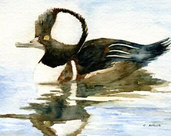 Painting of a Hooded Merganser Duck 5 x 7 Original Watercolor