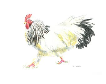 5 x7 Original Hand Drawn Colored Pencil Sketch of an Ameraucana Rooster
