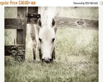 White Horse Photo, Photo of Horse, Horse Grazing, Horse in Pasture, Grazing Horse, Horse Photograph