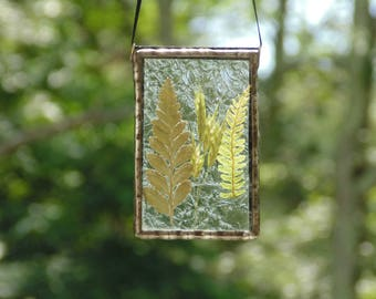 Fern suncatcher, pressed flowers, botanical, fern terrarium, stained glass suncatcher, ooak real ferns, nature inspired